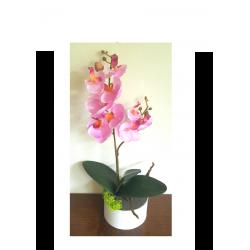 Petite orchidée rose